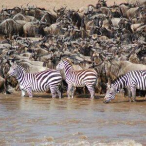 Serengeti Migration Safaris