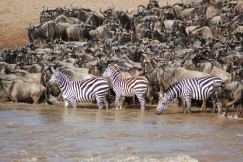 Serengeti Migration Safaris
