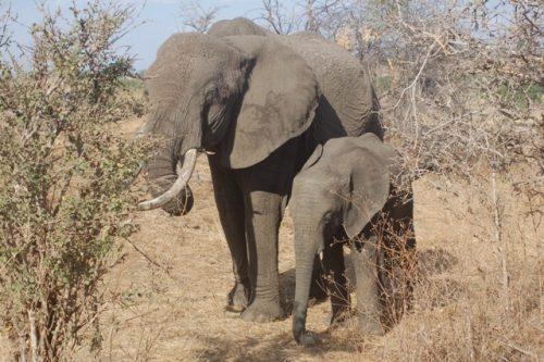 5 day Tanzania camping safari
