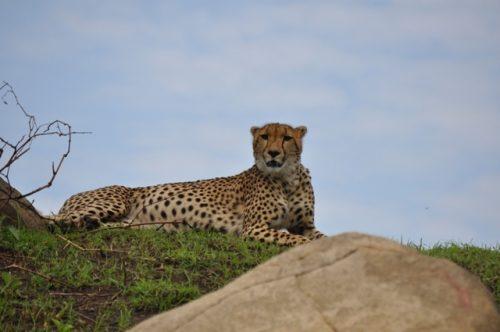 10 day Tanzania lodge safari