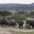 3 Day Budget Tanzania Safari