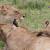 3 Day safari Tanzania budget