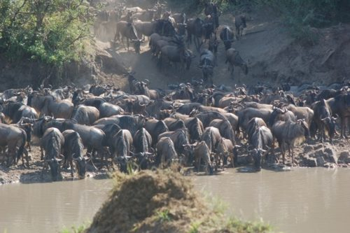 7 Day Serengeti Wildebeest Migration tours