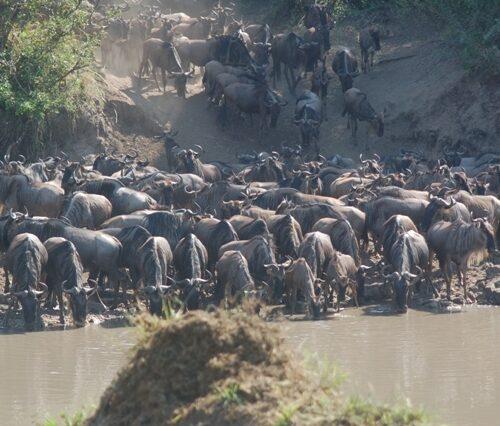 7 Day Serengeti Wildebeest Migration tours