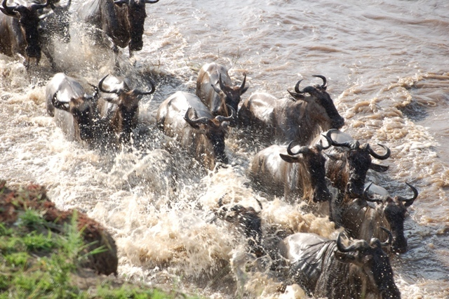 8 Day classic Serengeti Migration Safari