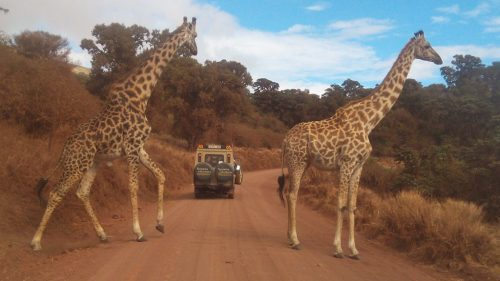 Tanzania Lodge Safari Itineraries