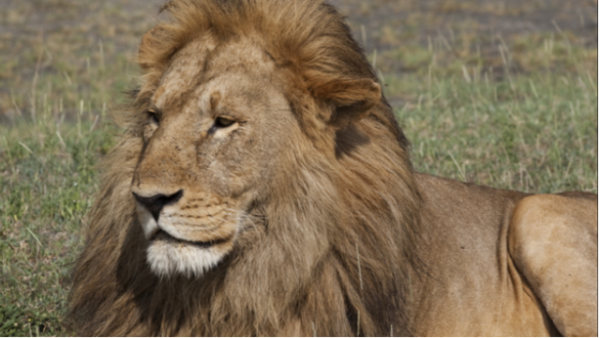 Budget Safari to Serengeti Migration 7 Day