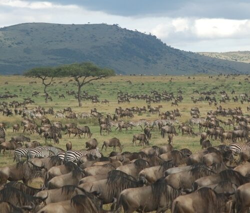 Serengeti migration 8 day safari