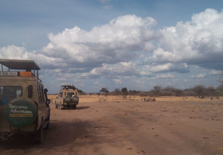 Serengeti migration safari 6 classic tours